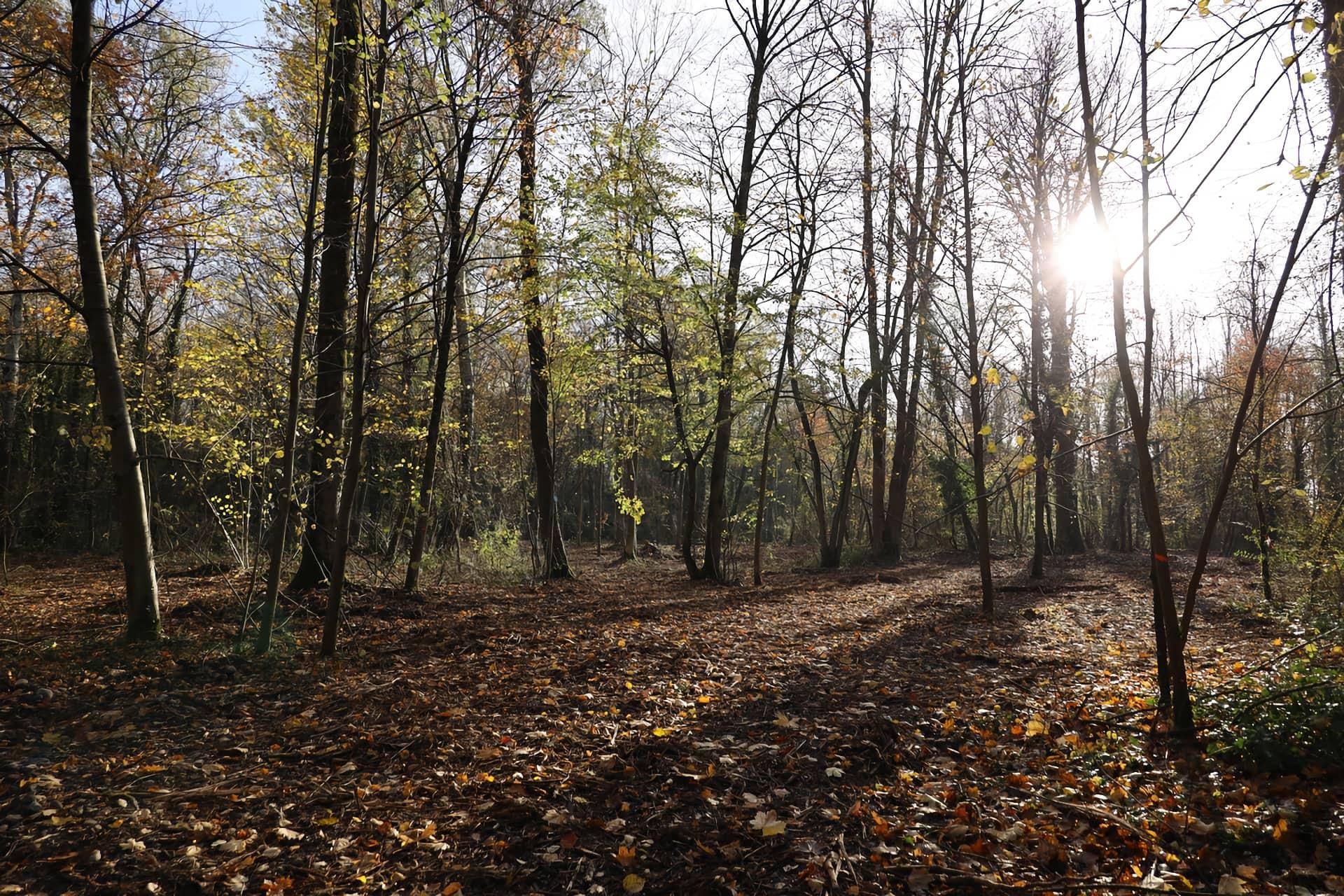 Bois de Gelinot
