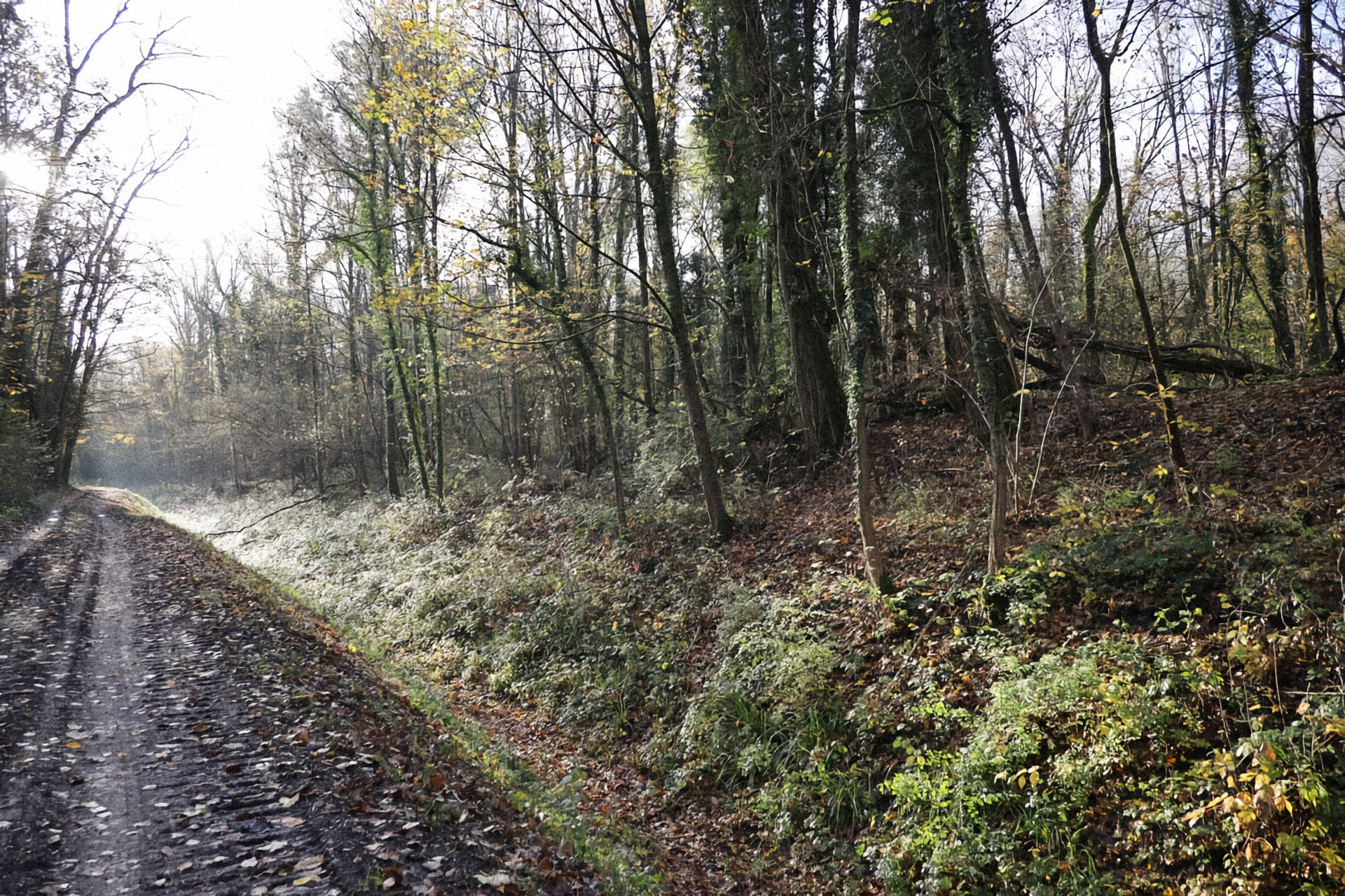 sentier dans le bois de Gelinot